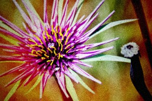 Nature-Flowers Plants-Stylized- 0575