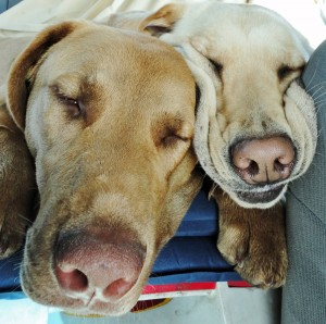 Go ahead...tell me they could possibly be tired!!